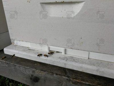Furto delle api