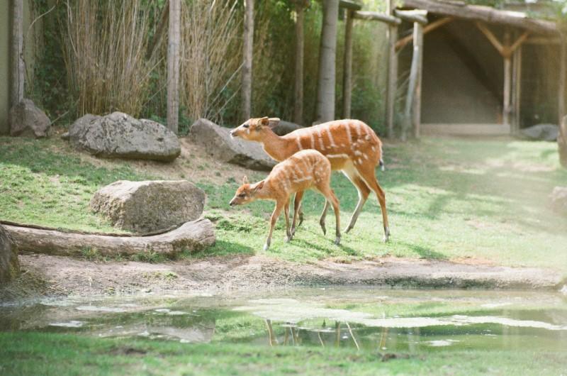 I giardini zoologici di Colonia